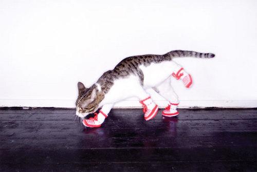 cat_booties