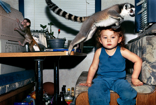 monkey_kid_lemur